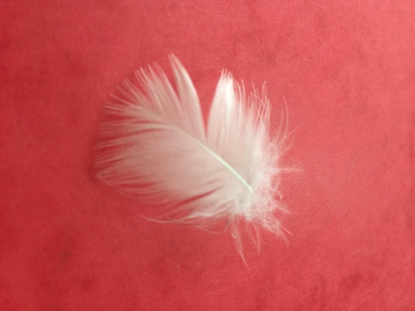 Comme une plume…